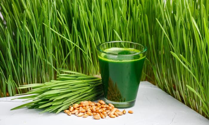 ประโยชน์ต้นอ่อนข้าวสาลี-ลดระดับคอเลสเตอรอล