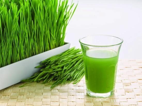 ประโยชน์ต้นอ่อนข้าวสาลี-มีโปรตีนสูง