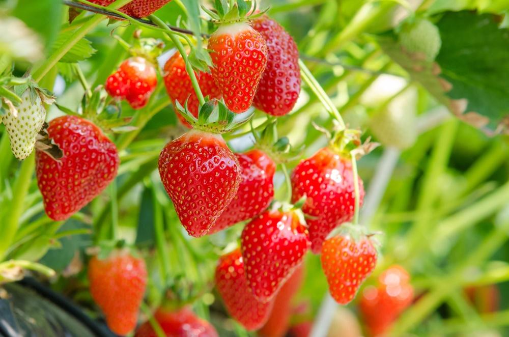 ผลไม้สีต่าง ๆ ดีต่อสุขภาพ